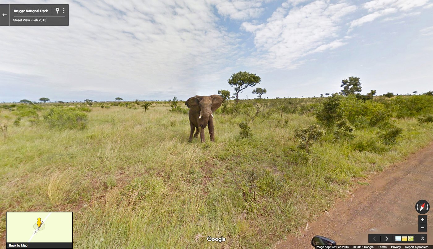 Go on an African Safari with Google Street View ...