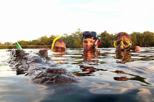 Dad filmed swimming with crocodiles
