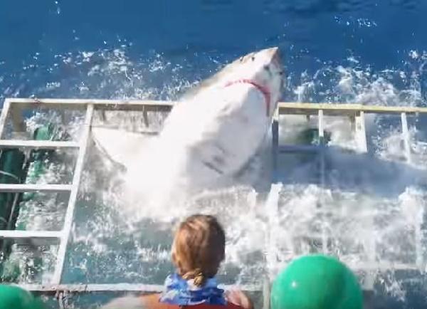 【衝撃】ケージにサメが侵入! 中にいたダイバーの運命は!?