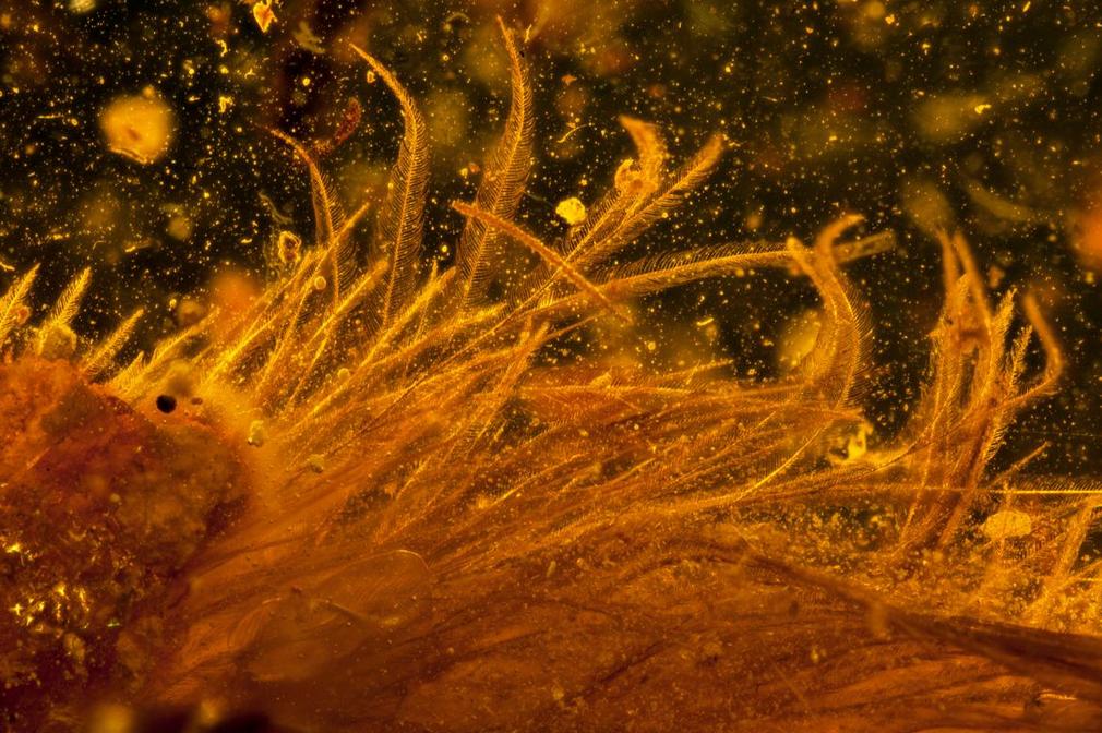 Des scientifiques ont retrouvé une queue de dinosaure à plumes (parfaitement conservée) pour la toute première fois Screen+Shot+2016-12-08+at+2.53.44+PM