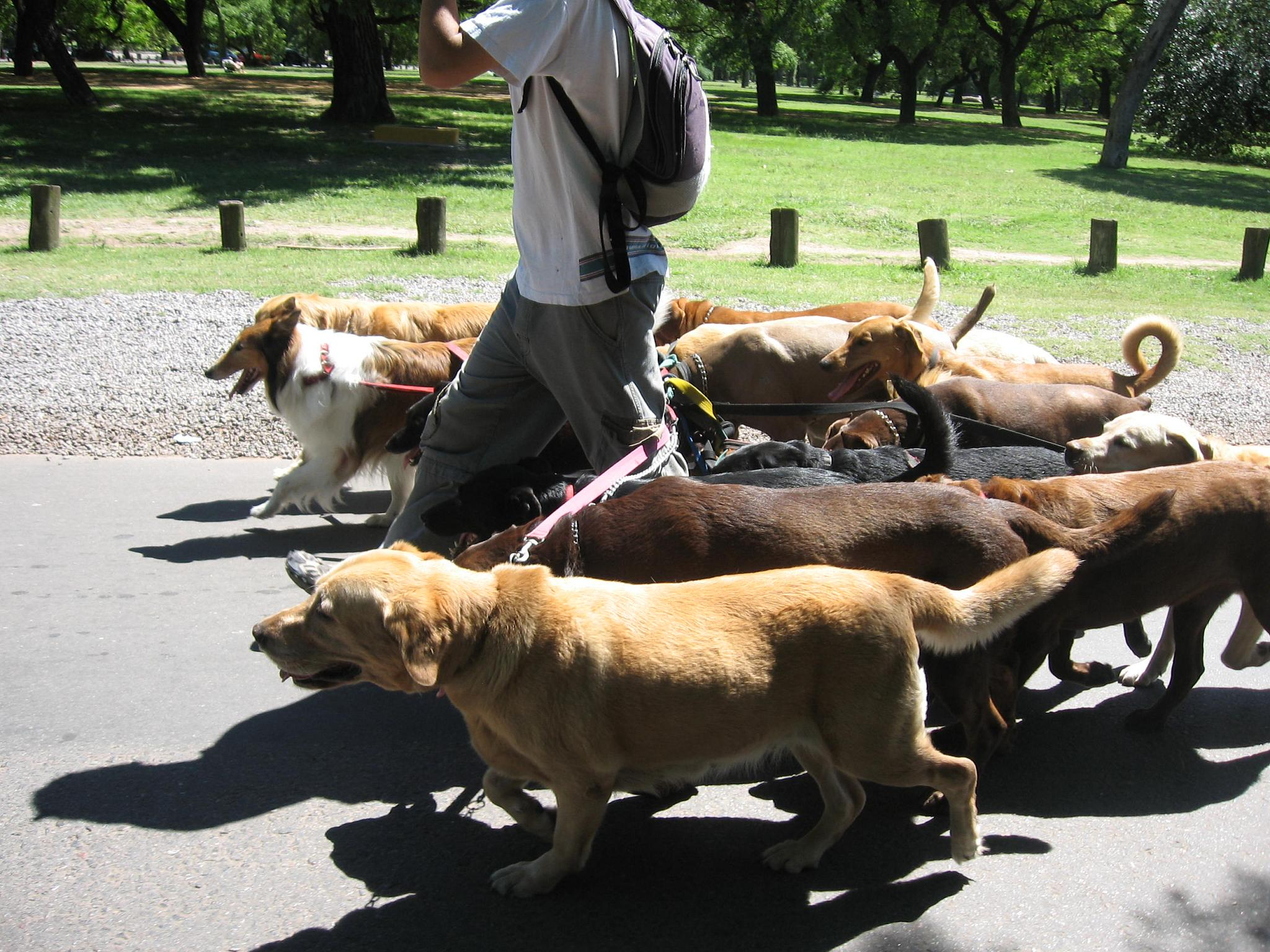 Rover Cards will Revolutionize the Dog Walking Industry