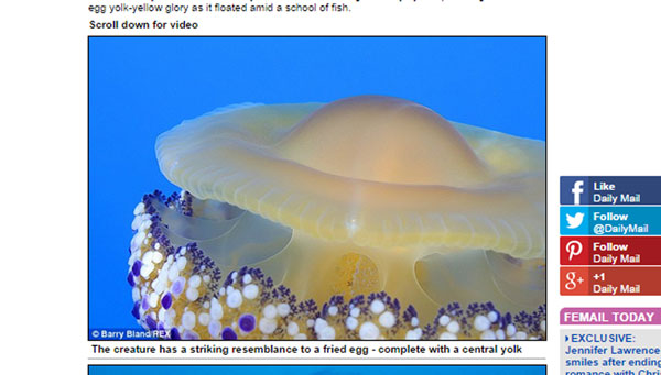 世界が震撼!地中海の海中に世にも奇妙な「クラゲ」が発見される