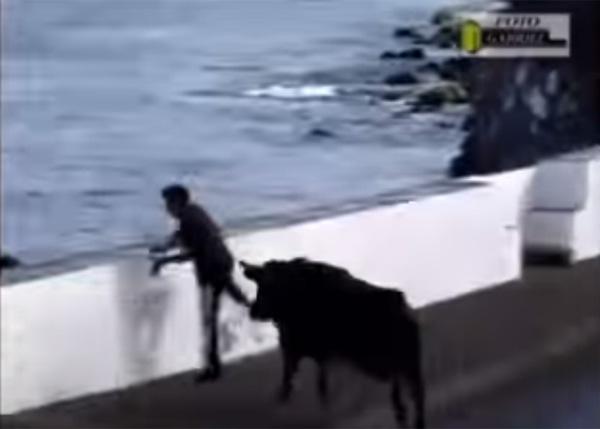 ギザギザハートかよ!武闘派のヤンキー牛が触るものをみな傷つけてコワすぎる