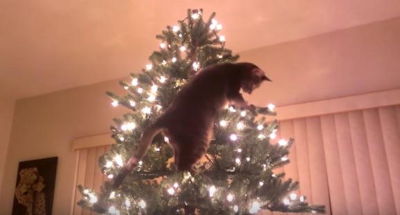 「あの木に登るニャ!」 ニャンコがクリスマスツリーに登るとどうなるか?【動画】