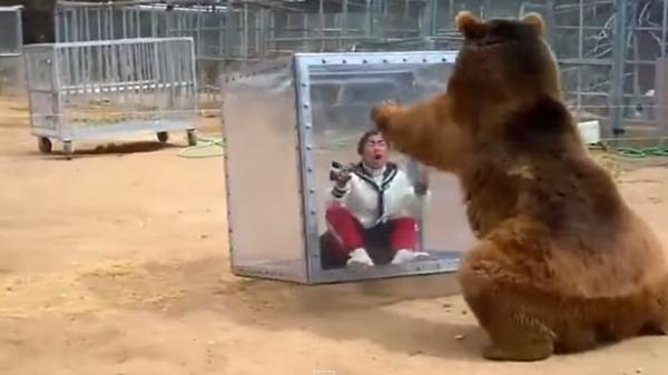 イモトVS熊、日本で当たり前の対決が世界では驚きのニュースに!