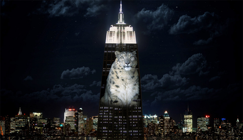A snow leopard projected on the Empire State Buliding