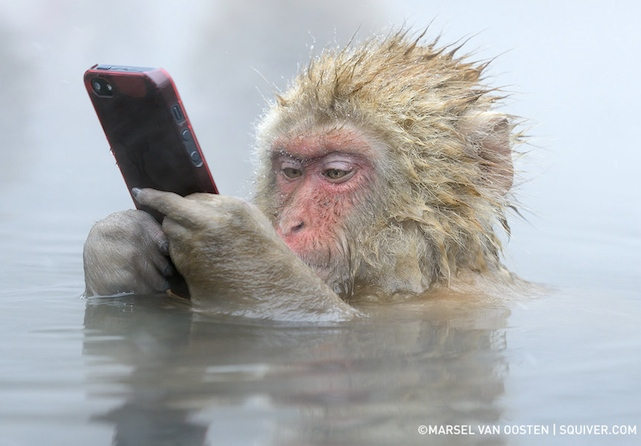 Snow Monkey using an iPhone