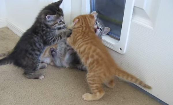 子猫4匹がモフモフな大ケンカ→ワンコが仲裁にきてリアクションが面白すぎる【動画】