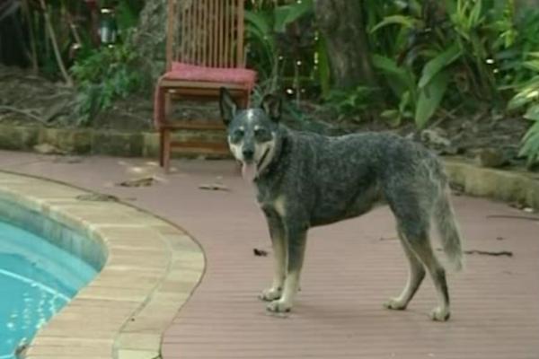 incredible animal journeys, amazing animals, sophie the dog