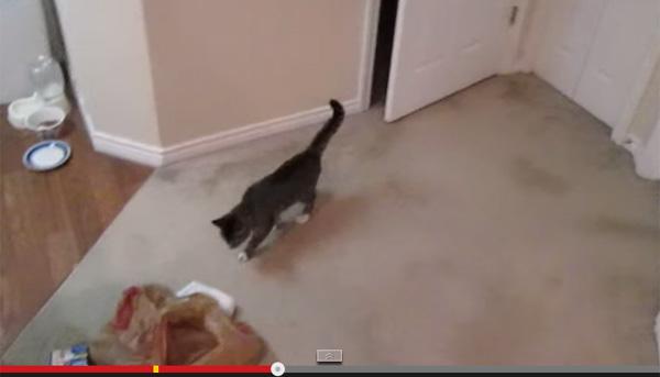 ドアをなんなく開ける賢すぎるネコ その方法が明らかに