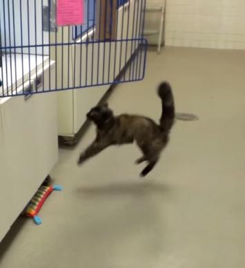 ワックスがけしてツルツルになった床でネコがジャンプ→衝撃の結果に【動画】