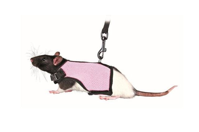 rat harness