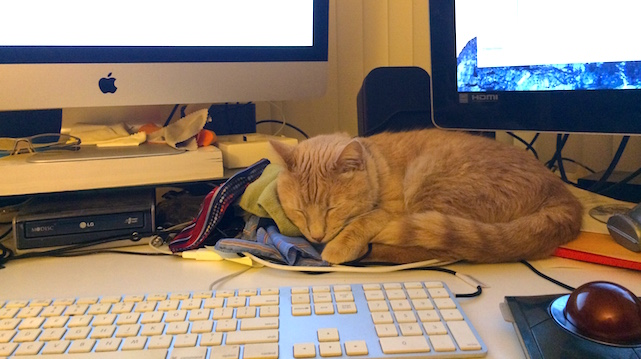 Caturday: Oliver, Dice, and Apple products vie for owner's attention