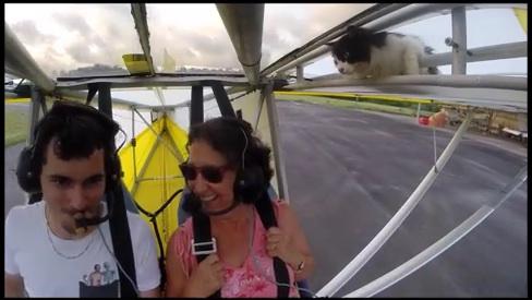 アイキャンフライ!ニャンコがグライダーの翼に乗って大空飛行【動画】