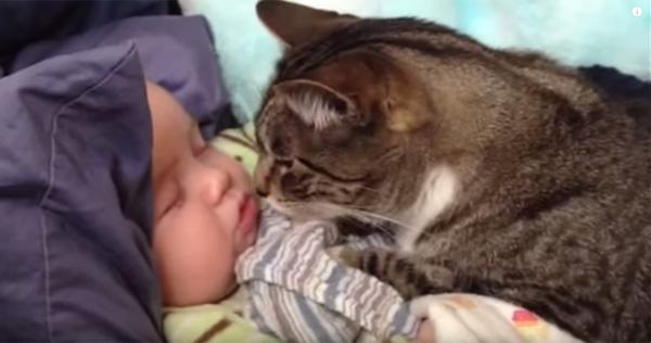 可愛すぎるニャンコがすやすや眠る赤ちゃんをじっと優しく見守る【動画】