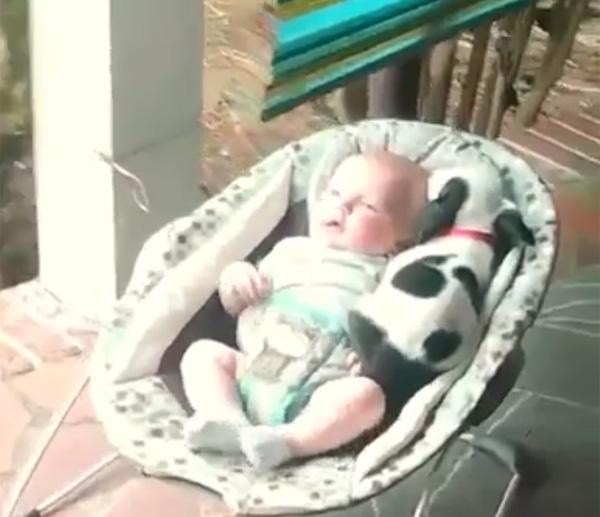 赤ちゃんにぴったり寄り添って眠る子犬が可愛すぎて悶絶するレベル【動画】