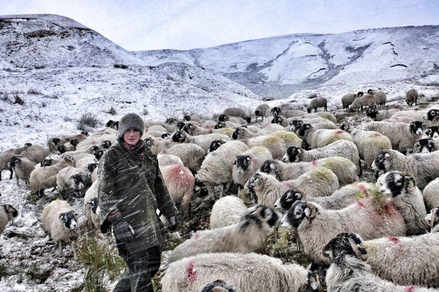 Amanda Owen Yorkshire Shepherdess