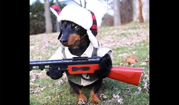 これから狩りに行くんだワン!ダックスフントのコスプレが可愛すぎると話題に【動画】