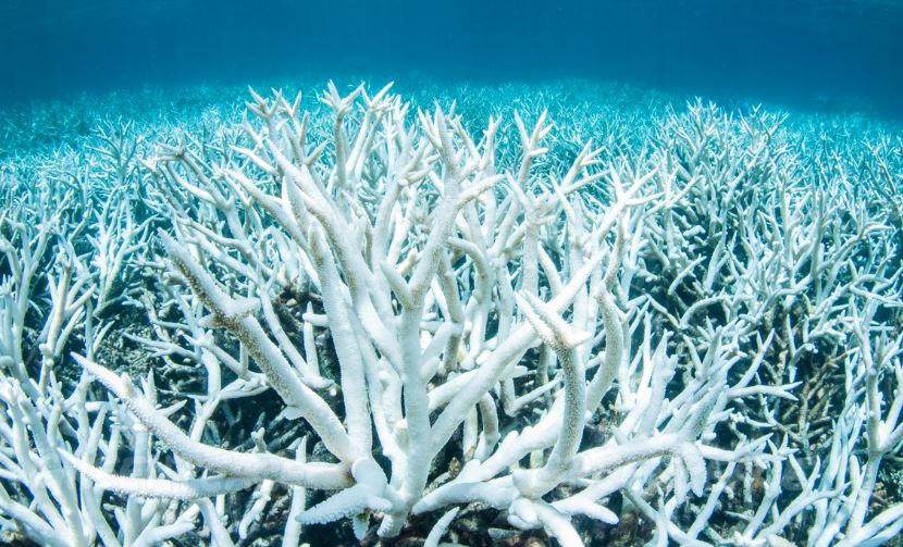Shocking New Pictures Of Coral Bleaching On Great Barrier Reef