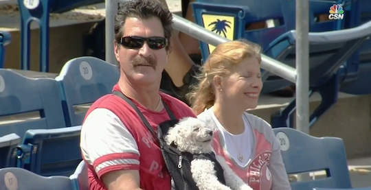 chill dog at a phillies game