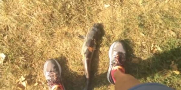 「くさっ!」 鳥が落とした巨大ナマズが女性の顔に命中する事件が発生