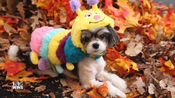 ハロウィンの間、飼い主が愛犬の安全のために注意すべき5つのこと