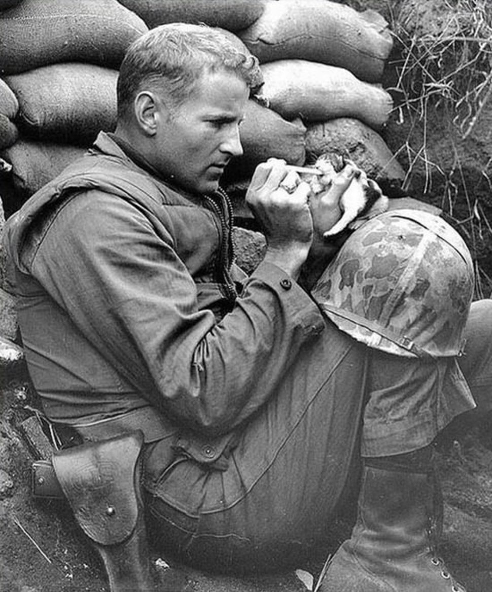 manliest photos on the internet, funny manly images, marine feeding kitten korean war