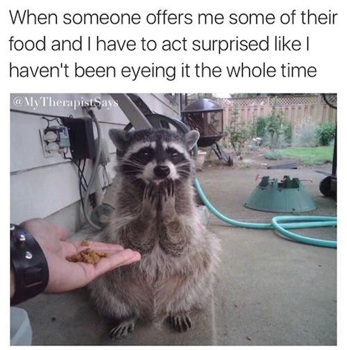 funny photos, funny memes