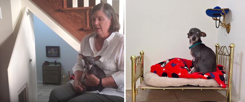 犬用ベッドやタンスまで! 階段の下のスペースにワンコ専用の部屋を作った飼い主