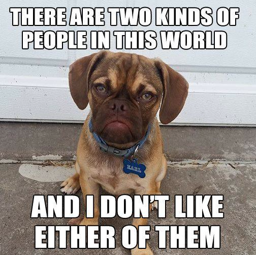 grumpy earl puggle meme