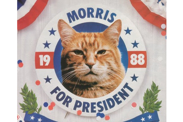 10 Animals That Ran For Office