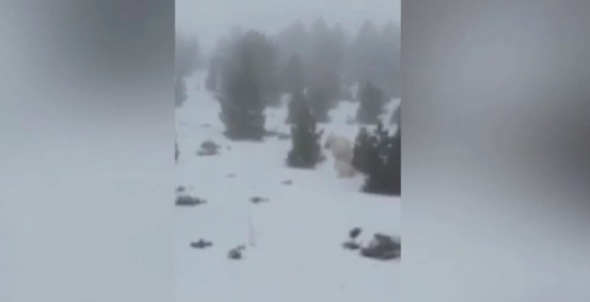 Have skiers caught the yeti on camera in Spain?