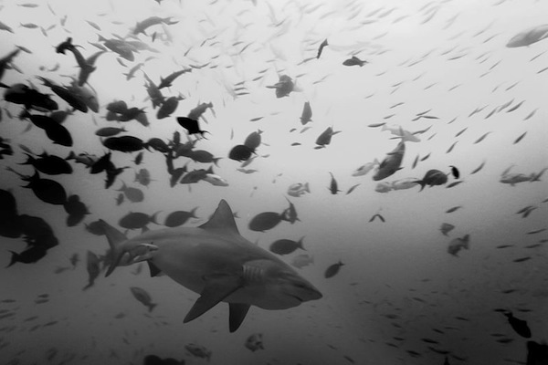 worst ways to die in australia, bull shark