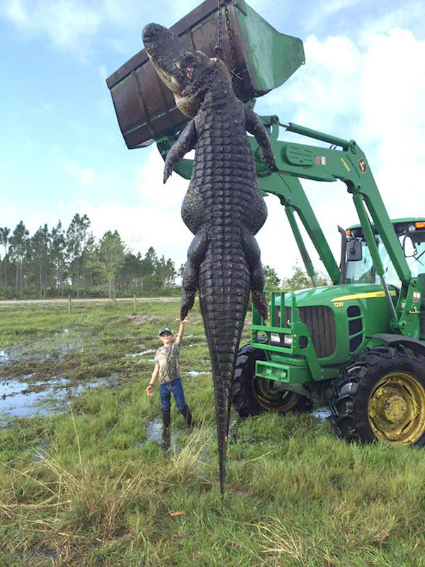 15ft Cattle-Eating Alligator Shot Dead In Florida