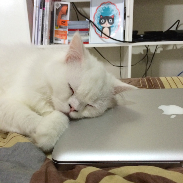 Cat sleeping on MacBook Pro