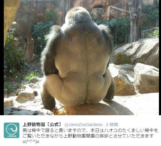 男のなかの男かよ!上野動物園のイケメンゴリラの背中が貫禄たっぷりでカッコよすぎる