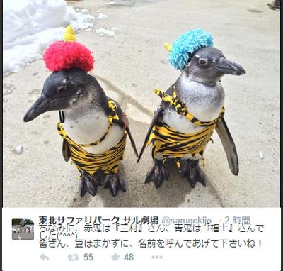 節分に赤鬼&青鬼コスプレしたペンギンが可愛すぎると話題 「豆は投げないで」