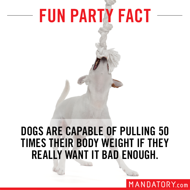 impressive sounding fake facts, fake fun facts, dogs pull 50 times body weight