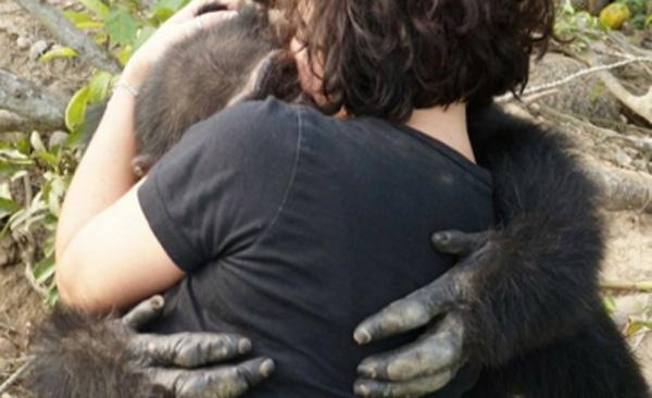 離島でひとりぼっちになったチンパンジーが久しぶりに出会った人間にとった行動とは?【動画】