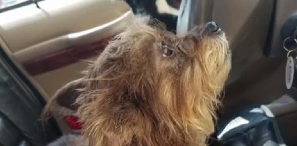 遅いワン!待ちくたびれた犬が車を運転して主人のいる大型スーパーに突っ込む!