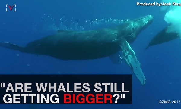あの世界最大の動物は今でも大型化している?