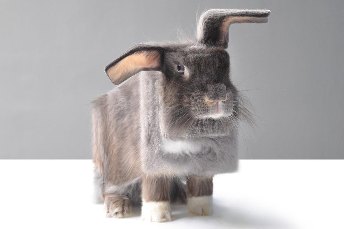 Sweet: Echte Tiere als Minecraft-Tiere