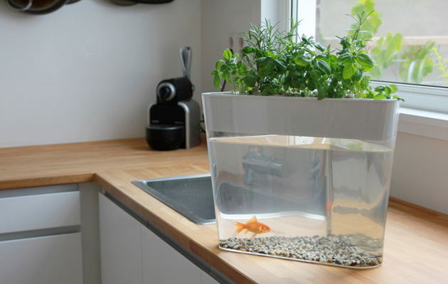 Finally, a hydroponic farm that runs on goldfish poop