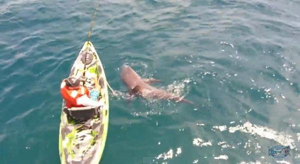 サメ地獄かよ!獰猛なサメが船をパワープレーで転覆させる【動画】