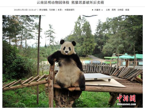 断固拒否!体重計を破してまで体重測定を拒否するパンダに世界が爆笑
