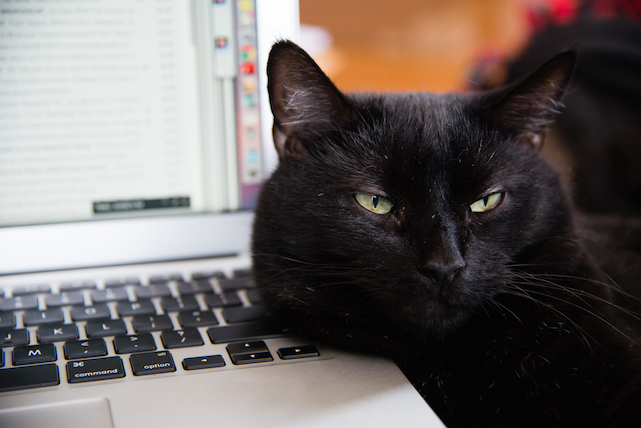 Caturday: There is no MacBook, there is only Zuul