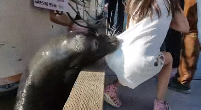 Startling video shows sea lion snatching girl from pier
