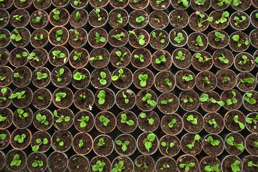 DARPA arbeitet an einem Frühwarnsystem aus Pflanzen