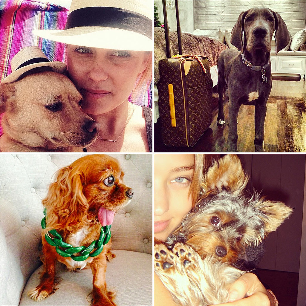 The most fashionable dogs of Instagram