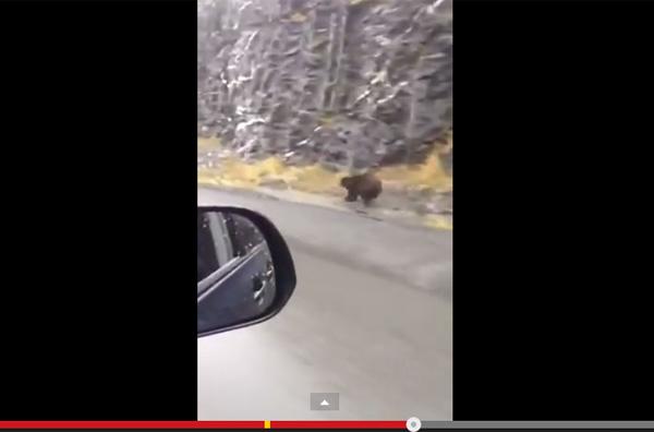 なにこれカッコイイ・・・野生のクマの速すぎる全力疾走がネット上で話題